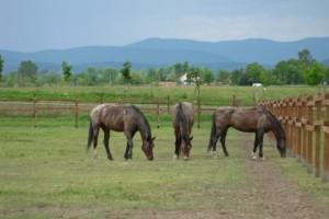 lovaglás oktatás